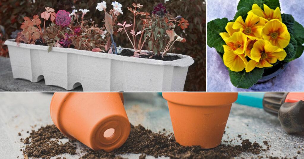 Krukväxter ej kompost
